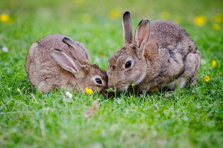 38fe0829429d8708d1a8_rabbits-1006621_1280.jpg