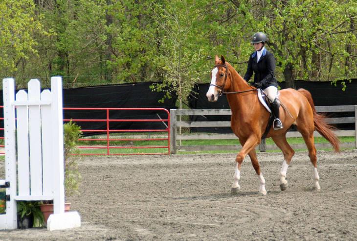 3a9cfe5ec0dee6d19ce2_Garden_Stat76e_Horse_Show_18_By_Lillian_Shupe.JPG