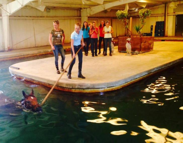 3c916e8619a963d96025_YouthcampSwimminghorses2.JPG