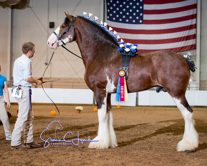 3f7fb5943636dfac553a_Keystone_International_Draft_Horses178.JPG