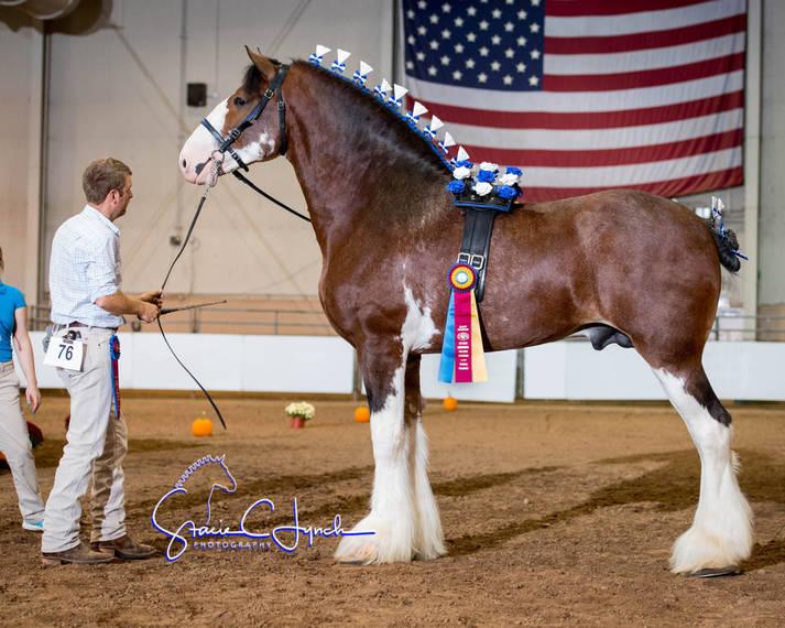 3f7fb5943636dfac553a_Keystone_International_Draft_Horses178.JPG