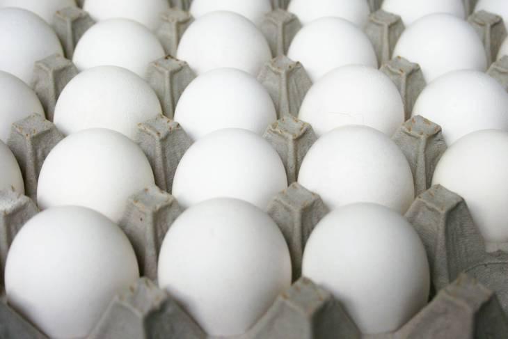 42f0be5838203119770c_eggs_017.jpg