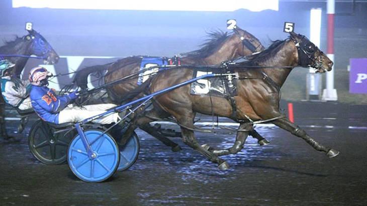 best_crop_43dd8909450b4ed7c6fa_wb_021018r7_Western_Joe@2x?v=4e1528a7af09de8f59e2 trottin' & pacin' harness racing news roundup tapinto