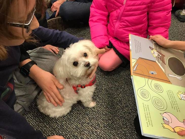 443d6bf79b7f92a7d93c_Read_to_Therapy_Dogs_-_Brie2.JPG