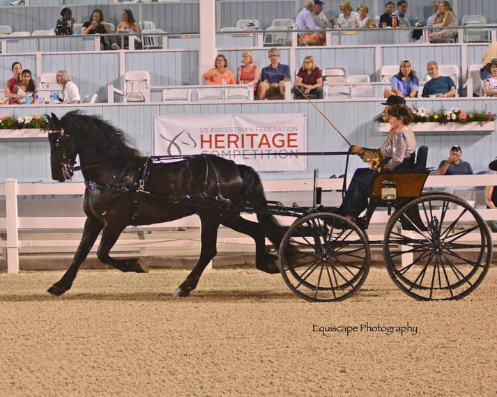 4720b03900673a2bf510_Devon_Horse_Show_Driving5.JPG