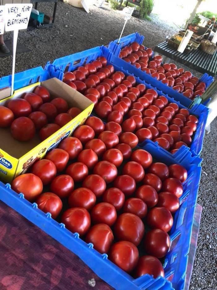 4f9dfc3f4bb099efd500_Fairfield_Farm_Tomatos.jpg