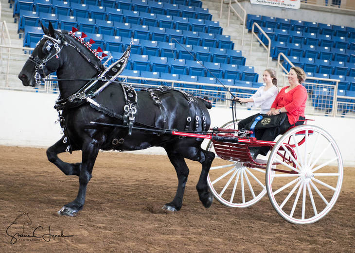53305806db790d3e9ad8_Keystone_International_Draft_Horses182.JPG