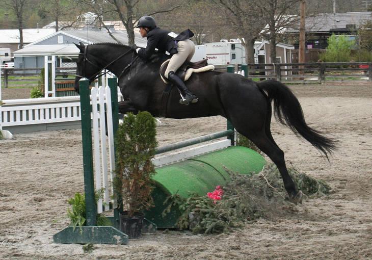 54e97c4e0070e0cddc81_Garden_Stat71e_Horse_Show_18_By_Lillian_Shupe.JPG
