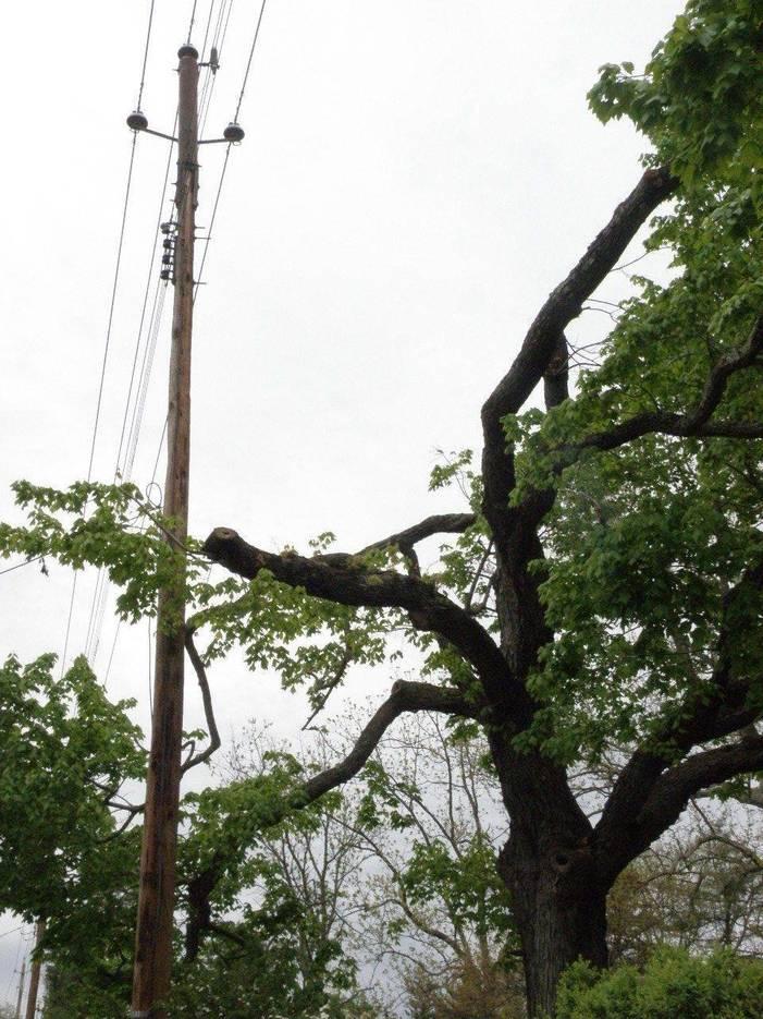 5e7379c5e38a40ca8d59_tree_trimming.JPG