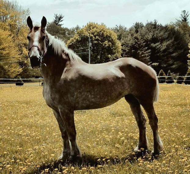 60fd1f5093846635a4af_auction_horses003.JPG