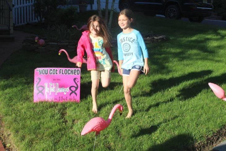 6604e1e25e85bd51bef4_RFL_Pink_Flamingos_a.JPG