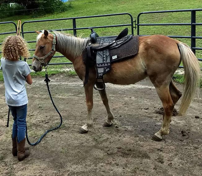 695f8041349975099504_auction_horses007.JPG
