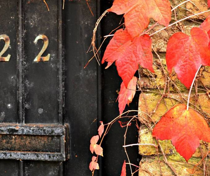 7249f536e78076ac1996_door_with_fall_leaves-211752_1920.jpg