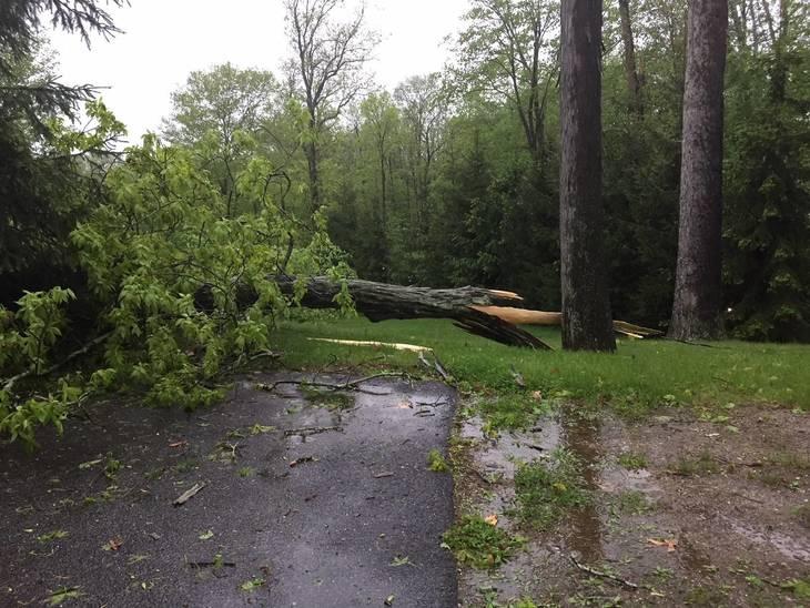 762aa83fd1a4b9600d6a_storm_pic_-_tree.jpg
