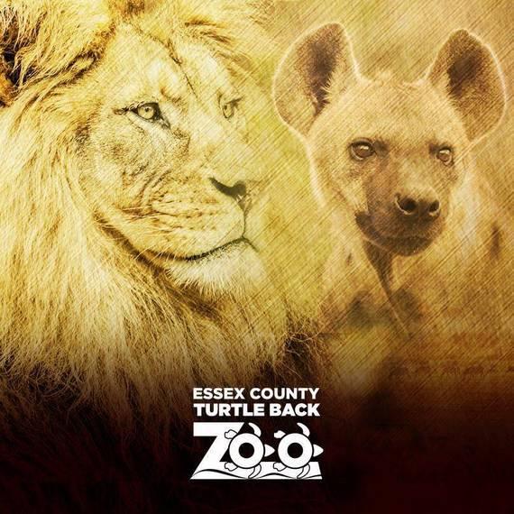 7dde0cebe73684d815ce_Turtle_Back_Zoo_Lions_square.jpg