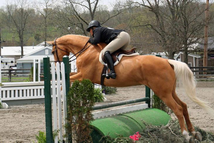 7f0ed7e9f1ef413326b7_Garden_Stat73e_Horse_Show_18_By_Lillian_Shupe.JPG