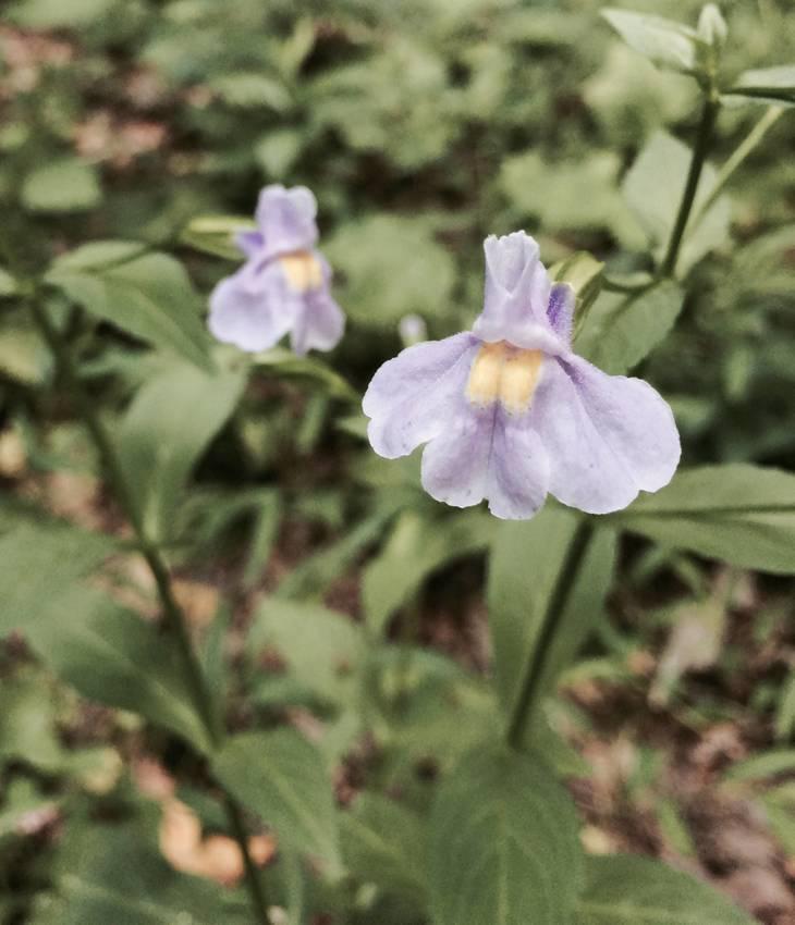 7f3f394119d346c3ebae_Flowers_-_Watchung_Reservation.jpg