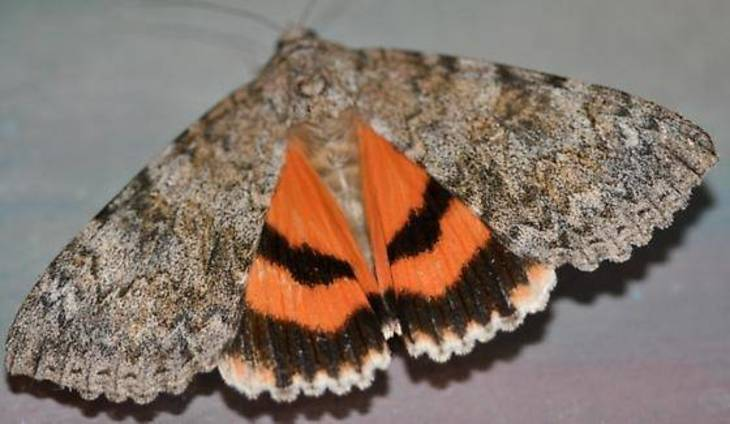 Moth Night at the Highland Woods Nature Reserve