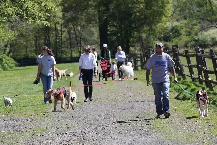 7ffb4af73f55f0bce5ac_dog_walk_april_24_2010__2_.jpg