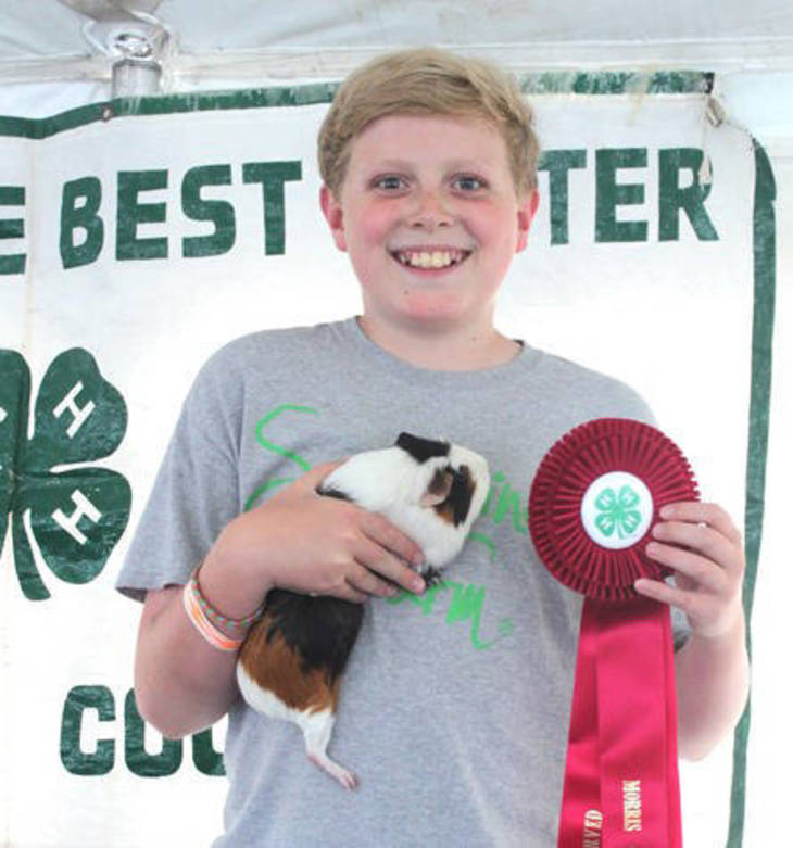 809c3ca76b1c4753e3e6_1707_4H_boy_and_guinea_pig.jpg