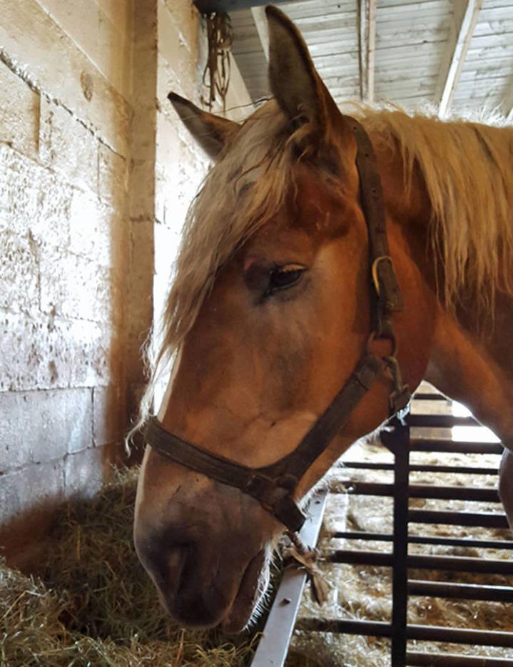 80d9bebcba446e9d2495_auction_horses010.JPG