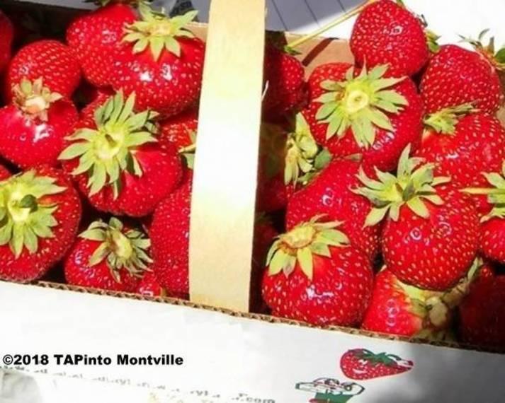 8257bf0733faaac2458b_strawberries__2018_TAPinto_Montville.jpg