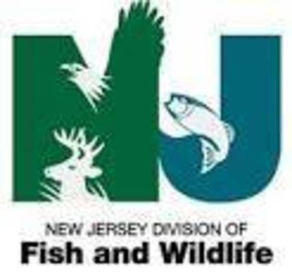 833fd6e8d5b9ba205aed_NJ_Fish_and_Wildlife_logo.jpg