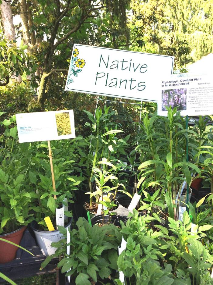8500ee436934c486f9d9_Garden_Fair_Native_Plants.jpg