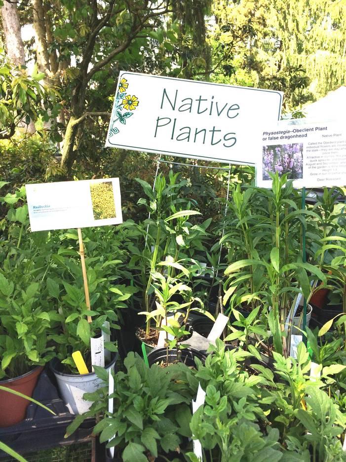 8500ee436934c486f9d9_Garden_Fair_Native_Plants.jpg