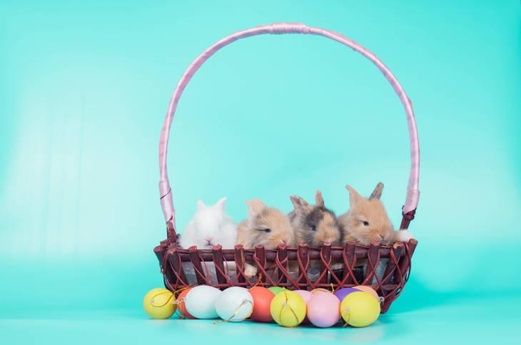 8e56b72a3a75fcf756a4_Easter_1.jpg