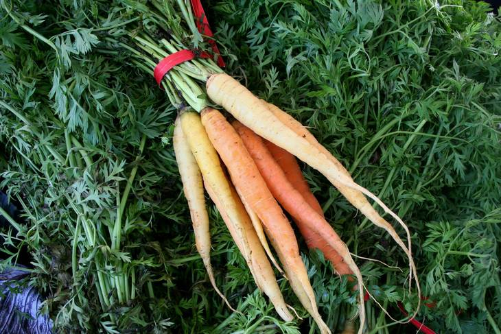 8e5ffdcf1d42220b8173_Matarazzos-Carrots-in-Many-Colors.jpg
