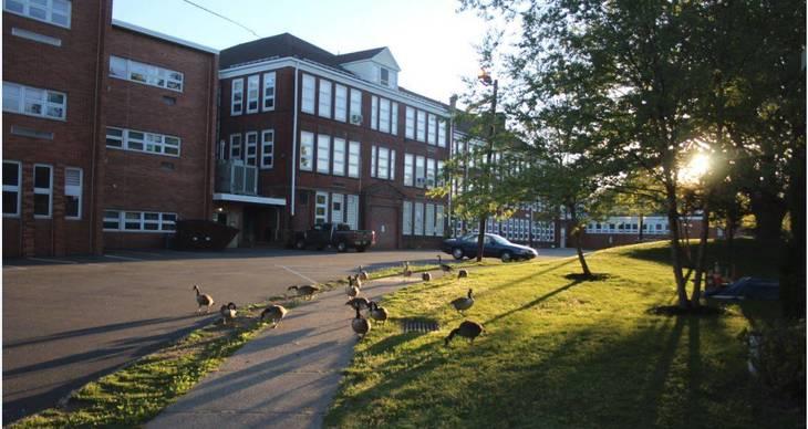 9042e8511245a5ab3cdf_Library_High_School_Canada_Geese_May_2017.JPG