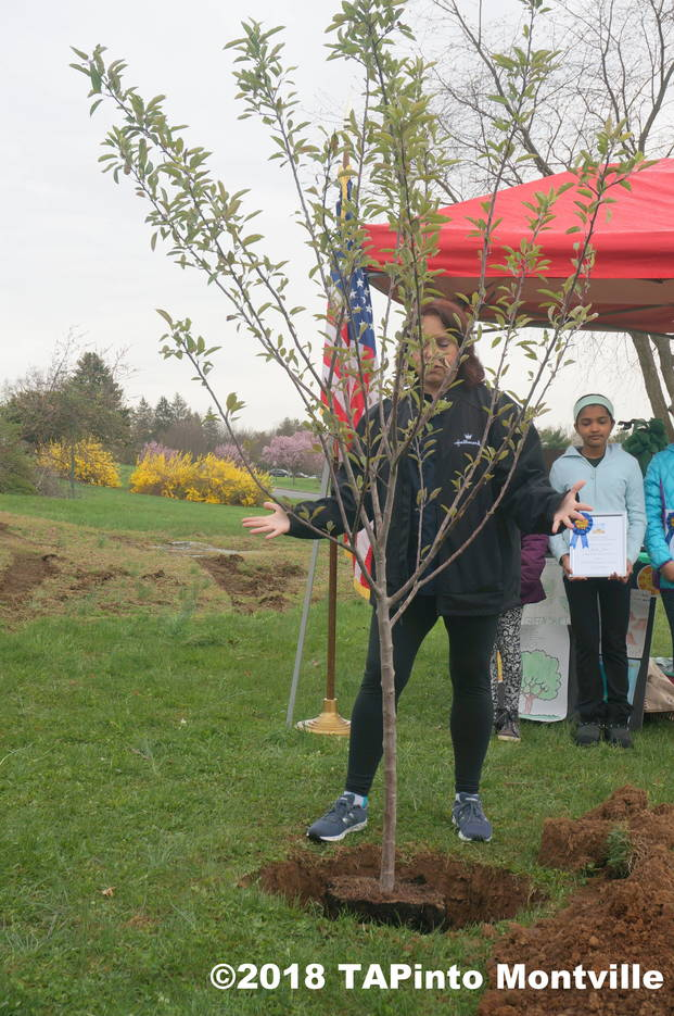90af7997859b78efd46a_a_Michele_Caron_describes_how_the_apple_tree_will_bear_five_colors_of_apples__2018_TAPinto_Montville.JPG