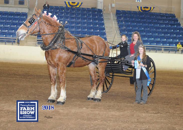 PHOTOS: Equines Shine At The Pennsylvania Farm Show - TAPinto