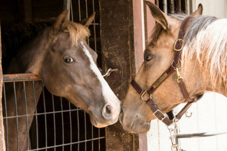 9c5cf877ad2354e2379a_horses_touching_noses.JPG