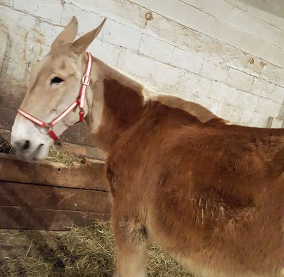 a17f13765e1f4f15e450_auction_horses008.JPG