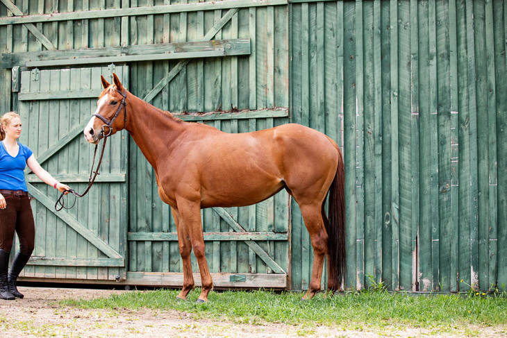 a1a6fda31067a4ce3add_New_Vocations_horses91.JPG