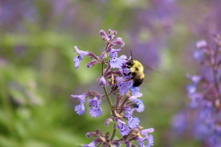 a20099345ce5e62b348d_Bee_-_Shakespeare_Garden__Micayla_.jpg
