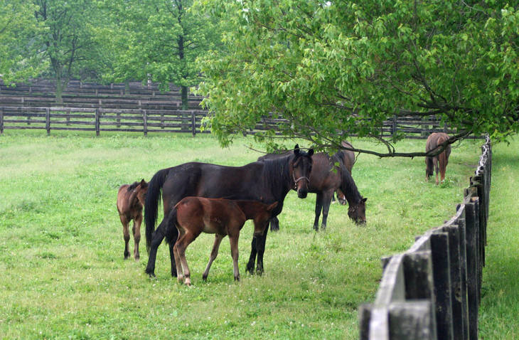 a3c870d50574b6d4bbe7_mares_and_foals.JPG