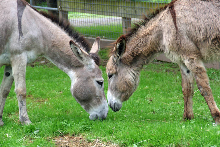 Can You Pin The Birth Date On The Donkey?