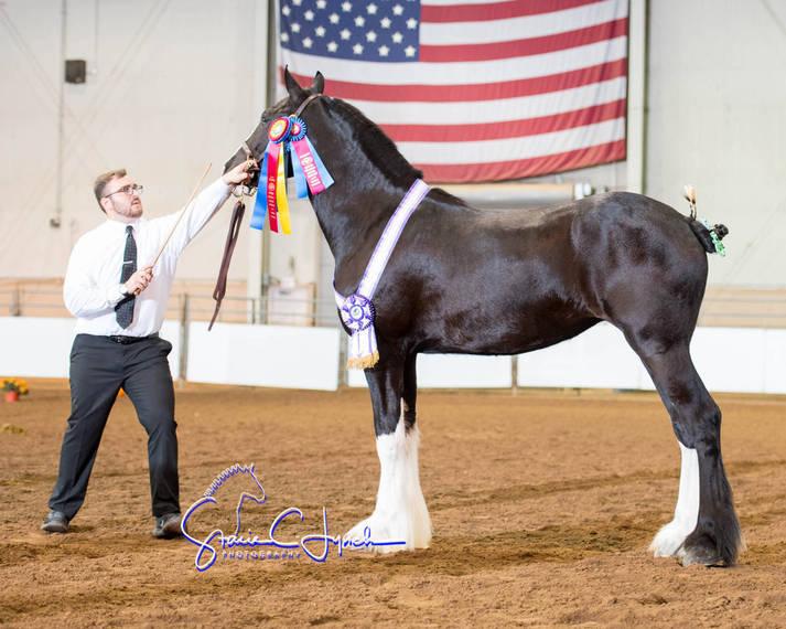 a87e8cf4d29093641e4a_Keystone_International_Draft_Horses186.JPG