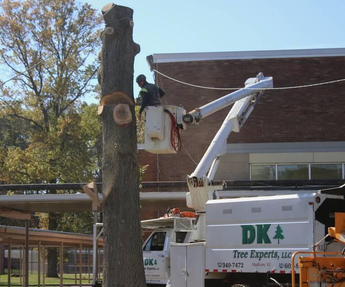 a87f47ac24a518c518ef_TAP_1D1S_DK_tree_Dave_.jpg