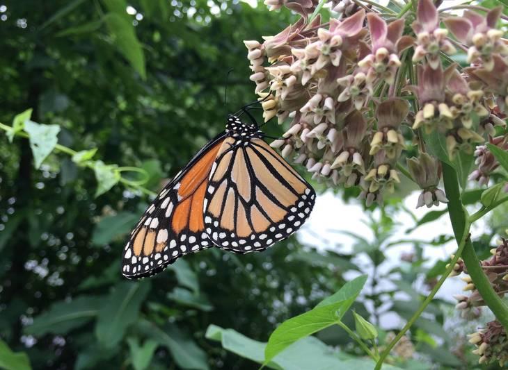 ab934055dd33683bbb60_Butterfly.JPG