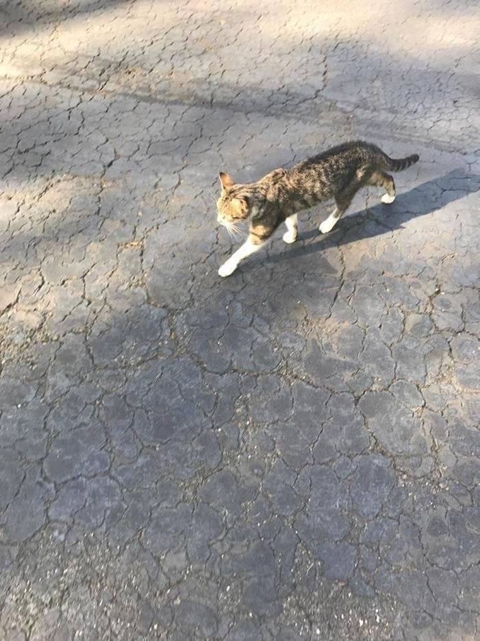 aedf4a0d53890d183a96_cat2.jpg