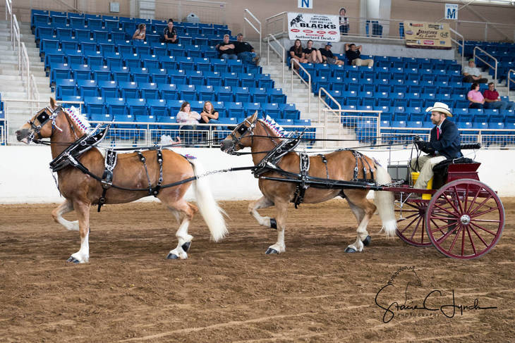 affa993951de45f8821e_Keystone_International_Draft_Horses190.JPG