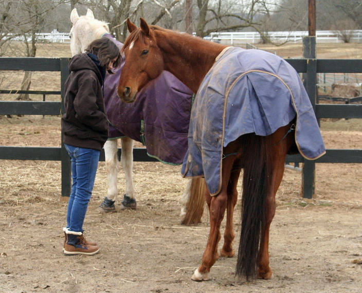 b455e72c897c8f9c7f38_Therapy_horse_honored06.JPG