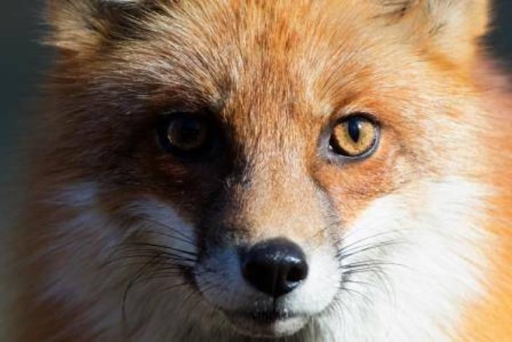 b4a21107d651fcb259c4_monopoli-fox.jpg