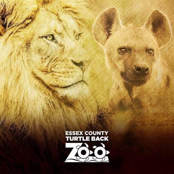 b71d37db9dd1ec990eec_7dde0cebe73684d815ce_Turtle_Back_Zoo_Lions_square.jpg