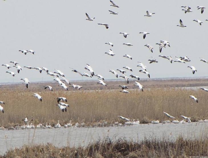 DEP Control Ensures Protection for New Jersey's Vulnerable Birds