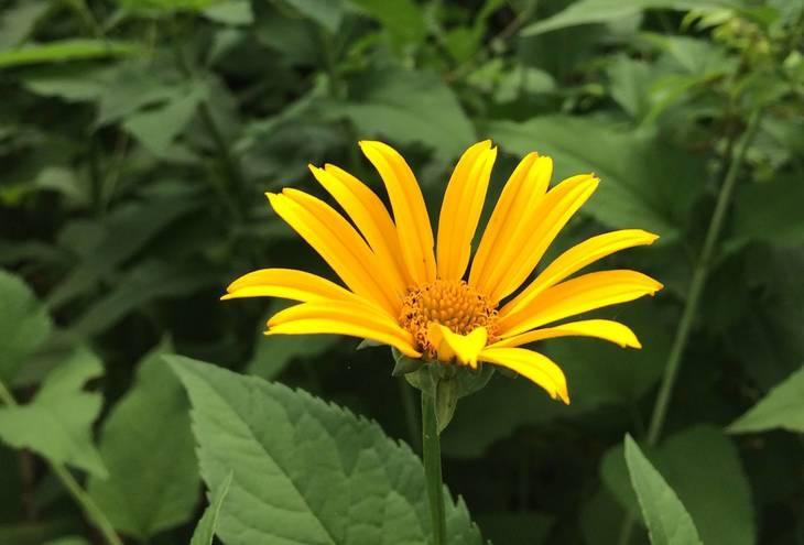 ba6b9a9d97bf5b0dab89_Orange_flower.JPG